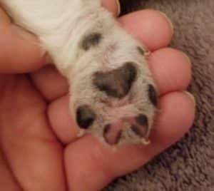 Rebecca & Romo Pups Thistledown Farms